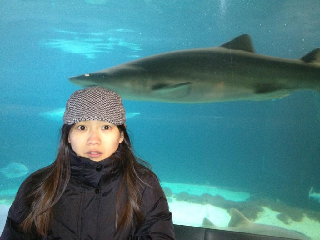 xw and Shark